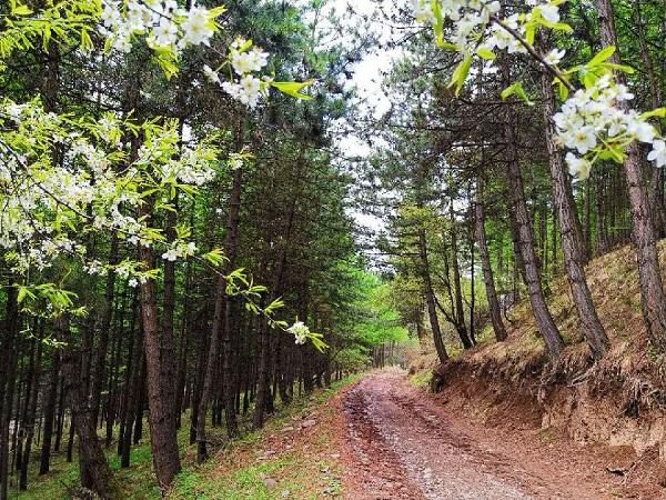 大雪山国有林场:高山上的造林奇迹